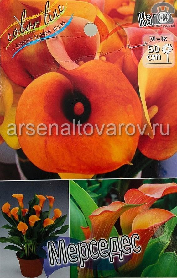 Посадочный материал цветов калла (белокрыльник) Мерседес многолетник клубень 2 шт. Нидерланды (Голландия)