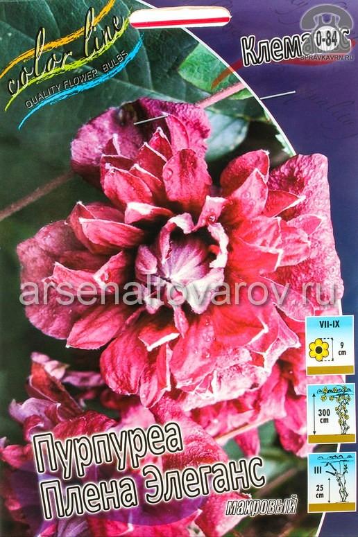 Посадочный материал цветов клематис Пурпуреа Плена Элеганс многолетник махровая корневище 2 шт. Нидерланды (Голландия)