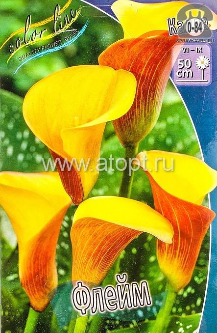 Посадочный материал цветов калла (белокрыльник) Флейм многолетник клубень 2 шт. Нидерланды (Голландия)