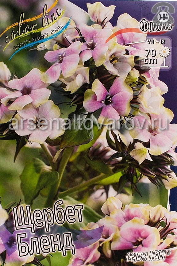 Посадочный материал цветов флокс Неон Щербет Бленд многолетник корневище 2 шт. Нидерланды (Голландия)
