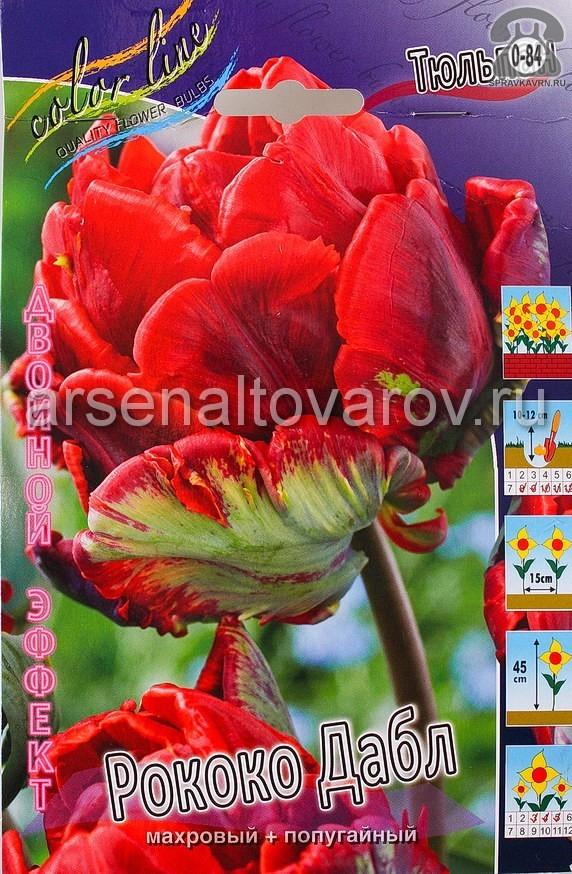 Клубнелуковичный цветок тюльпан Двойной Эффект Рококо Дабл