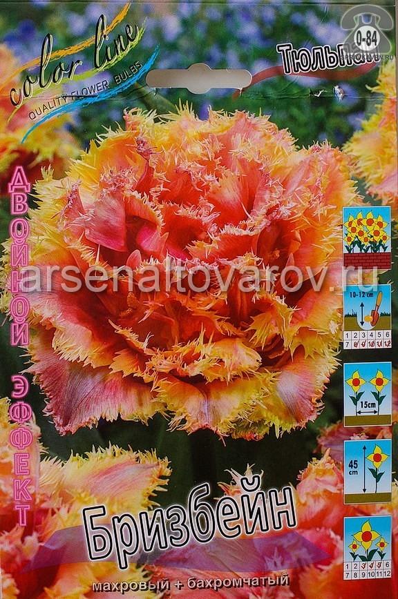 Клубнелуковичный цветок тюльпан Двойной Эффект Бризбейн