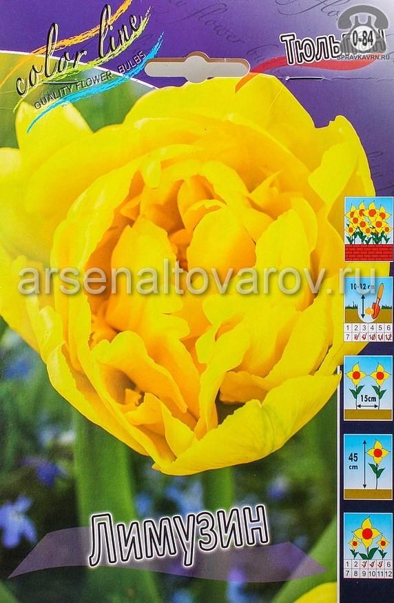 Посадочный материал цветов тюльпан Лимузин многолетник махровая луковица 10 шт. Нидерланды (Голландия)