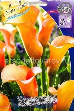 Посадочный материал цветов калла (белокрыльник) Хамелеон многолетник клубень 2 шт. Нидерланды (Голландия)