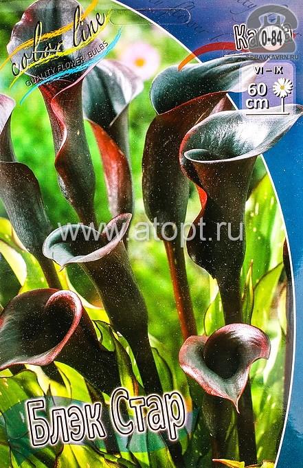 Посадочный материал цветов калла (белокрыльник) Блэк Стар многолетник клубень 2 шт. Нидерланды (Голландия)