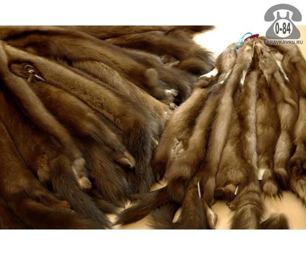 Мех натуральный соболь