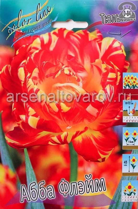 Посадочный материал цветов тюльпан Абба Флэйм многолетник махровая луковица 7 шт. Нидерланды (Голландия)