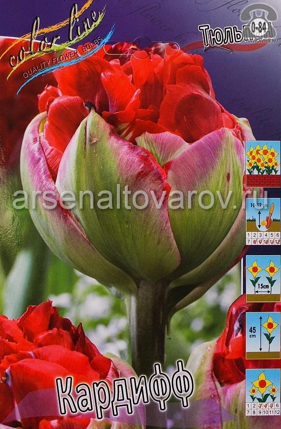 Посадочный материал цветов тюльпан Кардифф многолетник махровая луковица 10 шт. Нидерланды (Голландия)