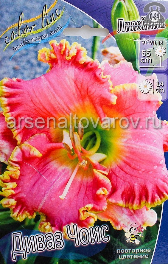 Посадочный материал цветов лилейник Диваз Чоис многолетник гофрированная корневище 1 шт. Нидерланды (Голландия)