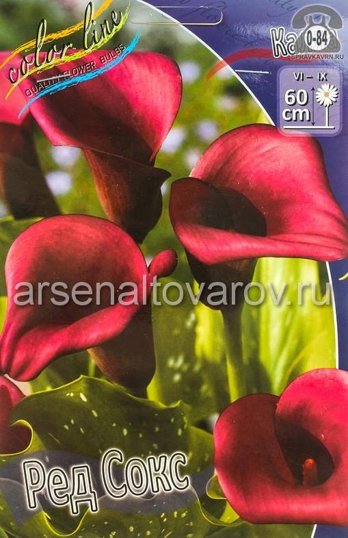 Посадочный материал цветов калла (белокрыльник) Ред Сокс многолетник клубень 2 шт. Нидерланды (Голландия)