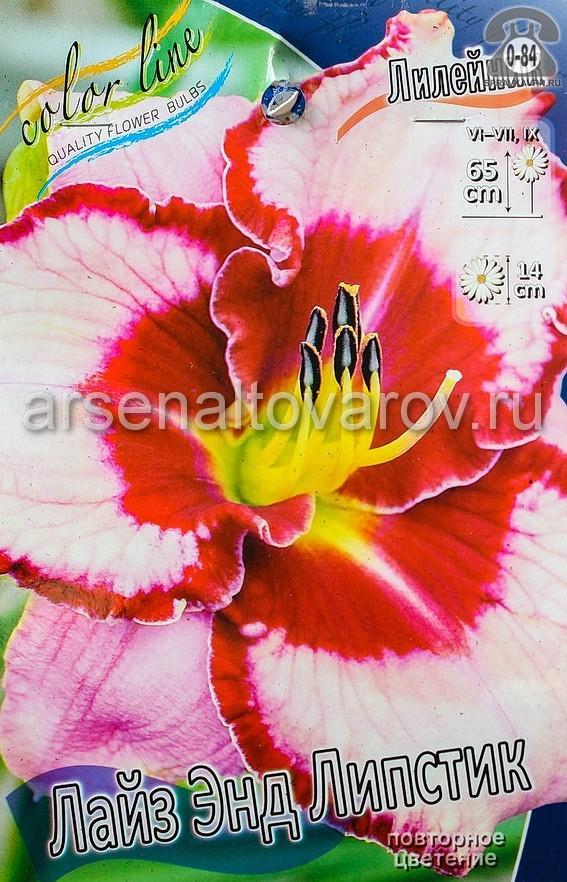Посадочный материал цветов лилейник Лайз Энд Липстик многолетник корневище 1 шт. Нидерланды (Голландия)