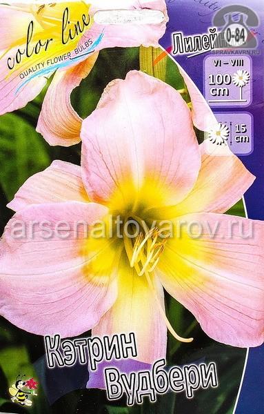 Посадочный материал цветов лилейник Кетрин Вудбери многолетник корневище 2 шт. Нидерланды (Голландия)
