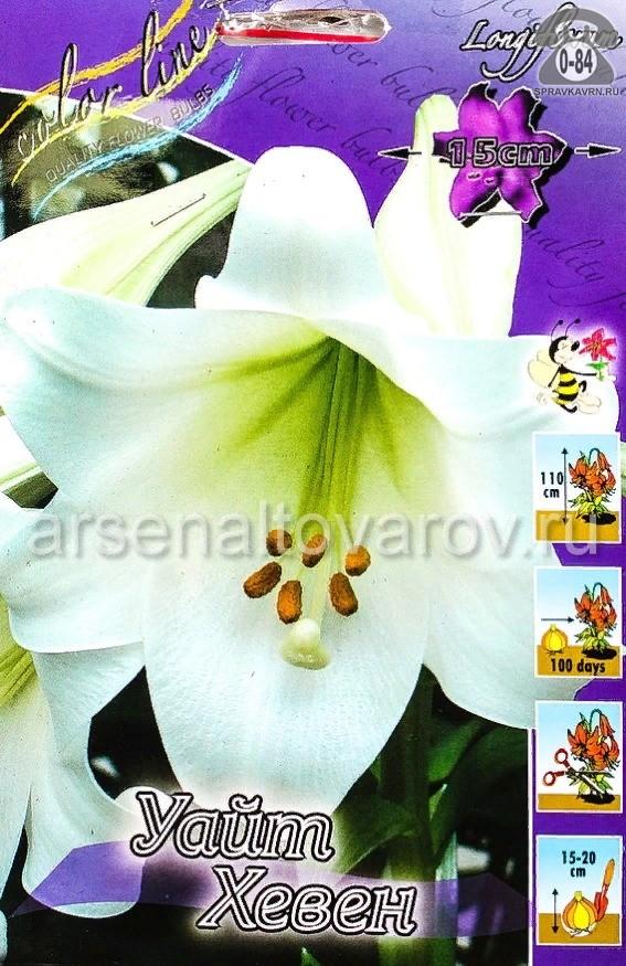 лилия длинноцветковая Уайт Хевен (в пакете 7 шт) цена за пакет луковичные (Голландия)
