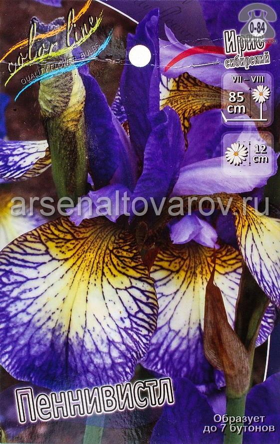 Посадочный материал цветов ирис (касатик) сибирский Пеннивистл многолетник корневище 2 шт. Нидерланды (Голландия)