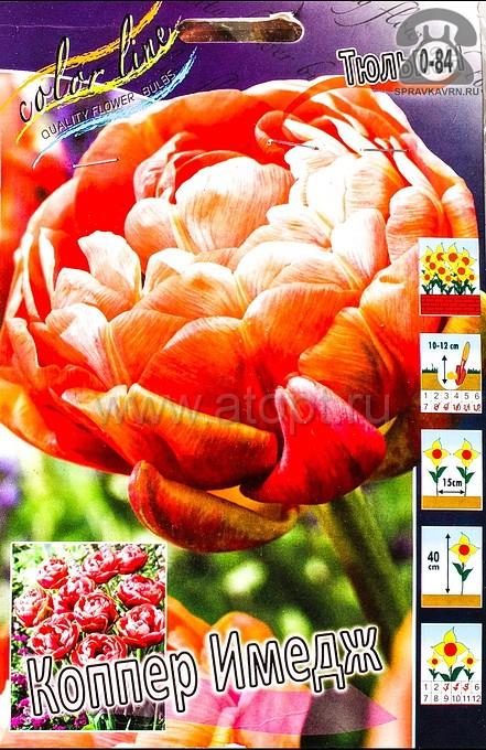Посадочный материал цветов тюльпан Коппер Имедж многолетник махровая луковица 10 шт. Нидерланды (Голландия)
