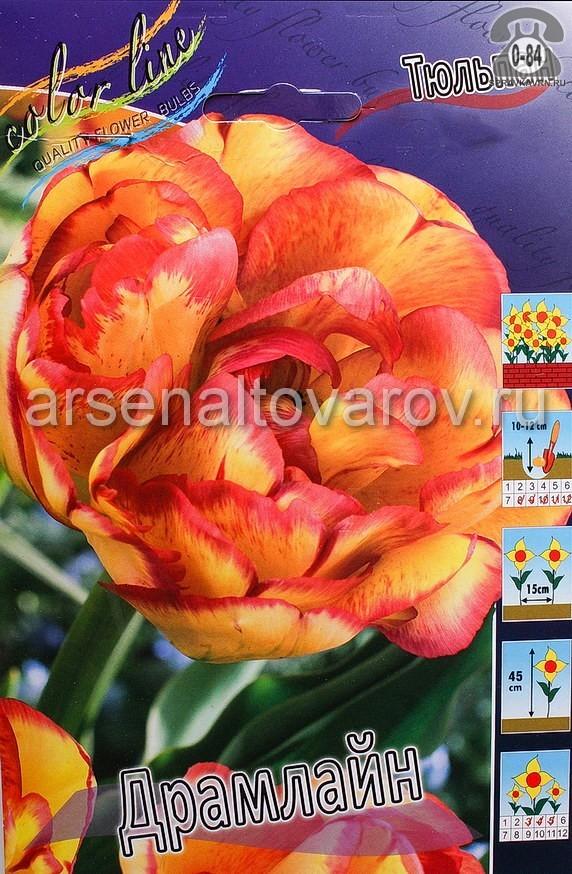 Посадочный материал цветов тюльпан Драмлайн многолетник махровая луковица 10 шт. Нидерланды (Голландия)
