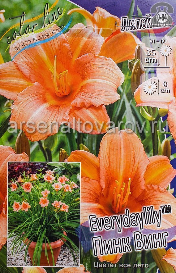 Посадочный материал цветов лилейник Пинк Винг многолетник корневище 1 шт. Нидерланды (Голландия)