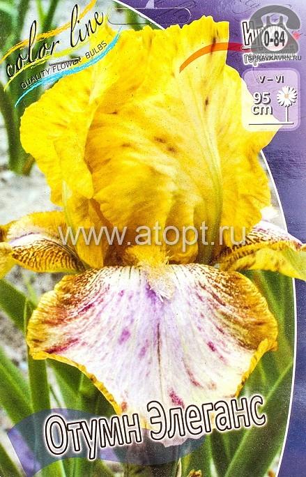 Посадочный материал цветов ирис (касатик) германский Отумн Элеганс многолетник жёлтый с фиолетовыми штрихами корневище 2 шт. Нидерланды (Голландия)