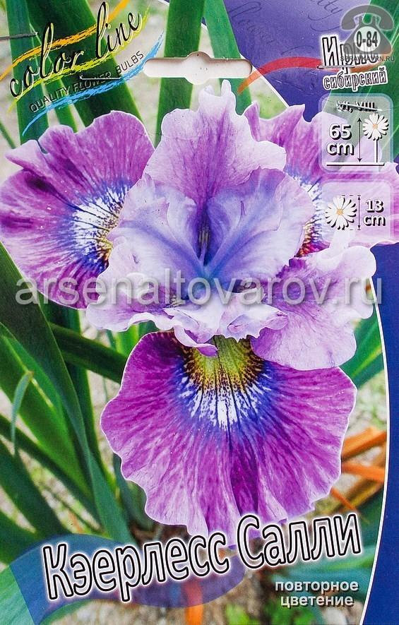 Посадочный материал цветов ирис (касатик) сибирский Кэерлесс Салли многолетник лиловый с желто-синим пятном корневище 2 шт. Нидерланды (Голландия)