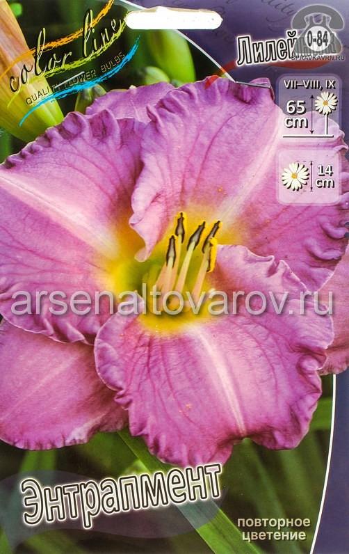 Посадочный материал цветов лилейник Энтрапмент многолетник корневище 1 шт. Нидерланды (Голландия)
