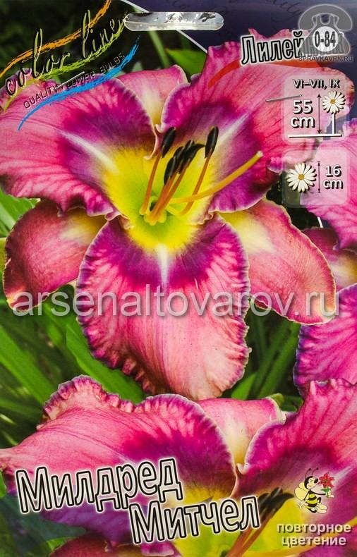 Посадочный материал цветов лилейник Милдред Митчел многолетник гофрированная корневище 2 шт. Нидерланды (Голландия)