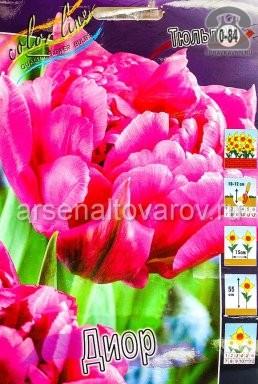 тюльпан махровый ранний Диор (в пакете 10 шт) цена за пакет луковичные (Голландия)