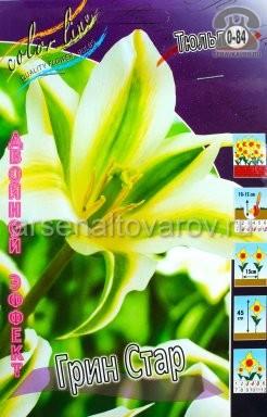 Клубнелуковичный цветок тюльпан Двойной Эффект Грин Стар