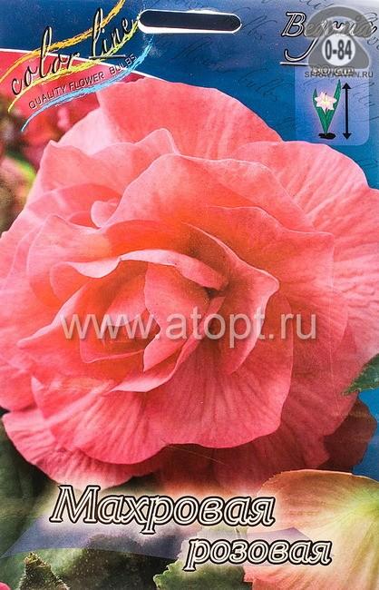 Посадочный материал цветов бегония многолетник махровая розовый клубень 2 шт. Нидерланды (Голландия)