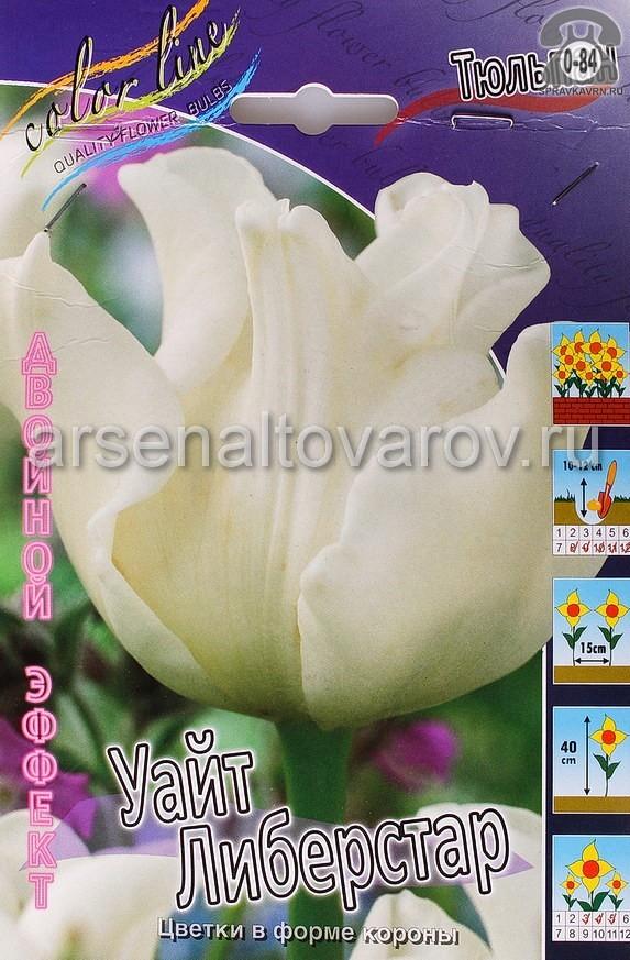 Клубнелуковичный цветок тюльпан Двойной Эффект Уайт Либерстар