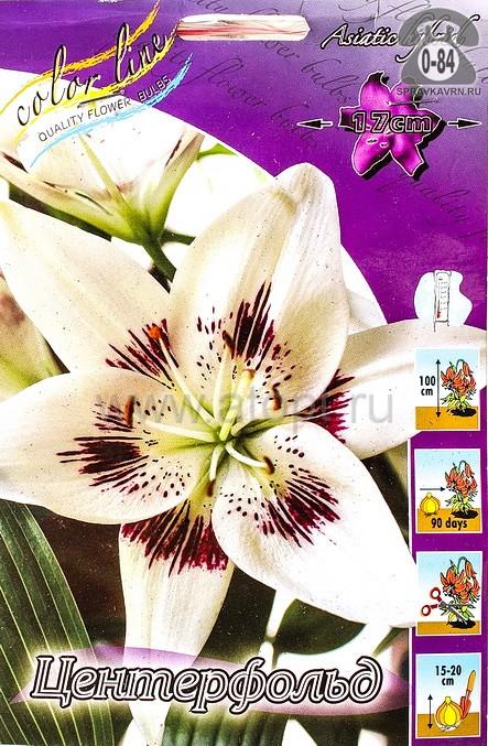 Клубнелуковичный цветок лилия азиатская Центерфольд