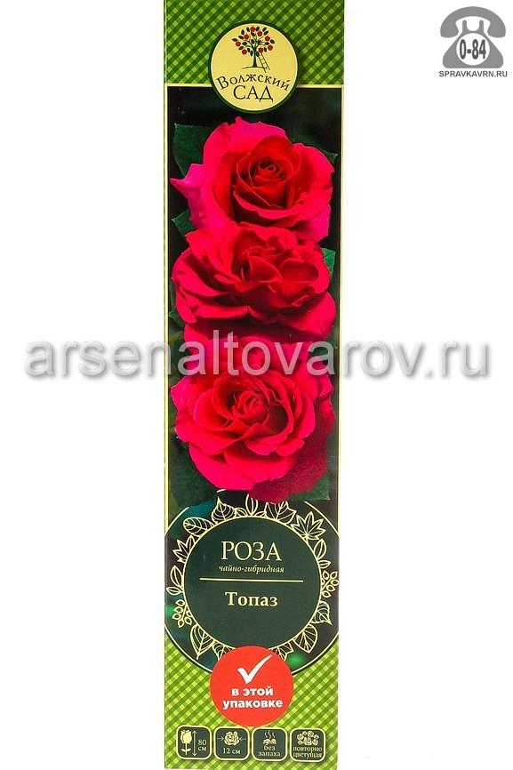 Саженцы декоративных кустарников и деревьев роза чайно-гибридная Топаз кустистый лиственные зелёнолистный махровый ярко-розовый открытая Россия