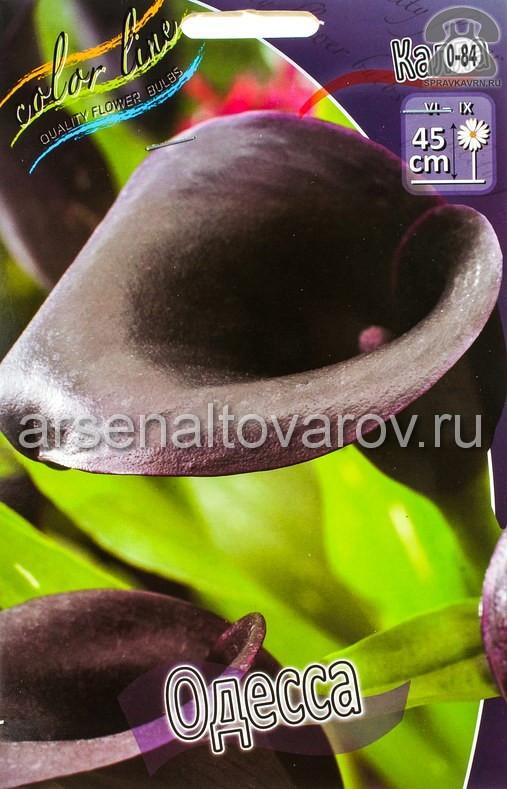 Посадочный материал цветов калла (белокрыльник) Одесса многолетник клубень 2 шт. Нидерланды (Голландия)