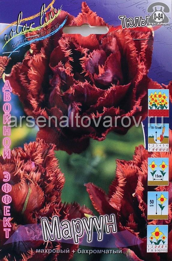 Клубнелуковичный цветок тюльпан Двойной Эффект Маруун