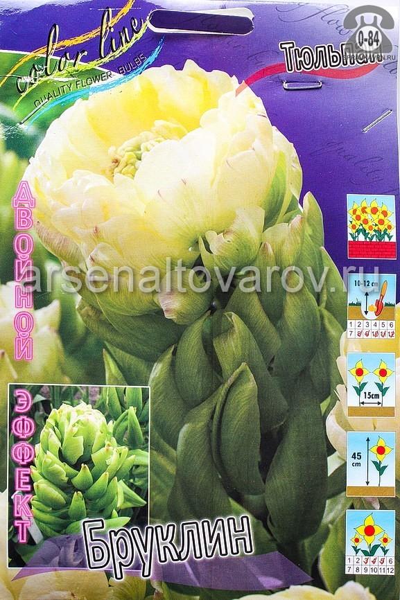 Клубнелуковичный цветок тюльпан Двойной Эффект Бруклин