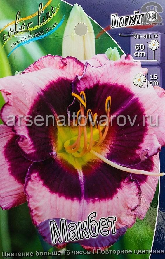 Посадочный материал цветов лилейник Макбет многолетник корневище 1 шт. Нидерланды (Голландия)
