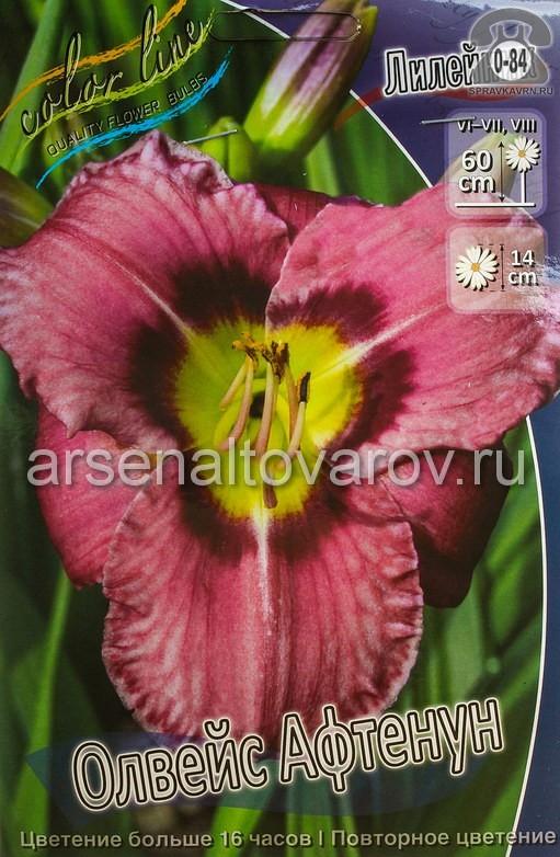 Посадочный материал цветов лилейник Олвейс Афтенун многолетник корневище 1 шт. Нидерланды (Голландия)