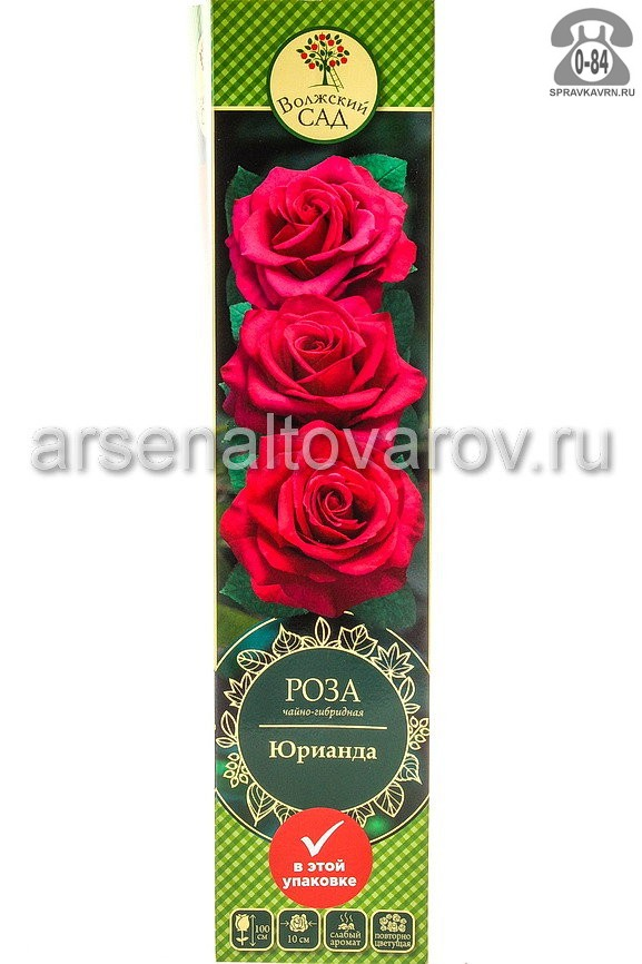 Саженцы декоративных кустарников и деревьев роза чайно-гибридная Юрианда кустистый лиственные зелёнолистный бокаловидный насыщенно-розовый открытая Россия