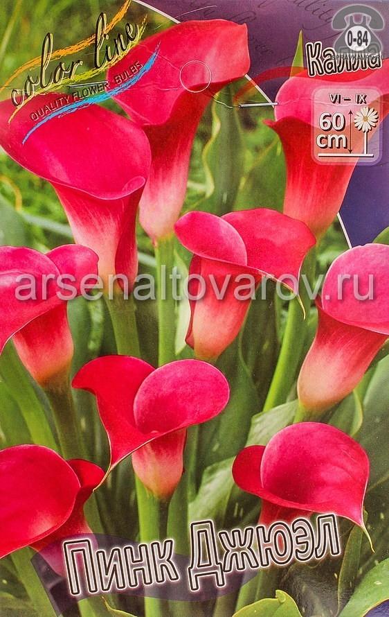 Посадочный материал цветов калла (белокрыльник) Пинк Джюэл многолетник клубень 2 шт. Нидерланды (Голландия)