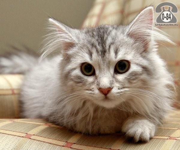 Корм для животных диетический кошки