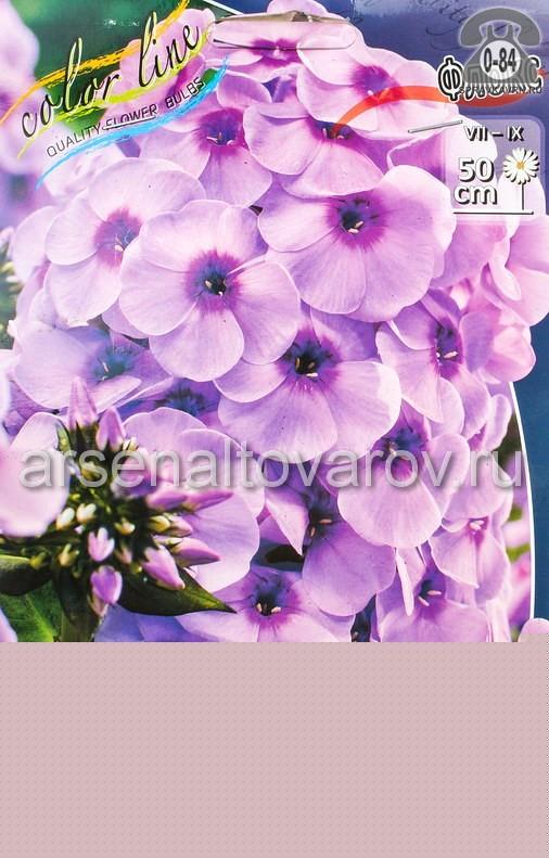 Посадочный материал цветов флокс Фондант Фэнси многолетник корневище 3 шт. Нидерланды (Голландия)