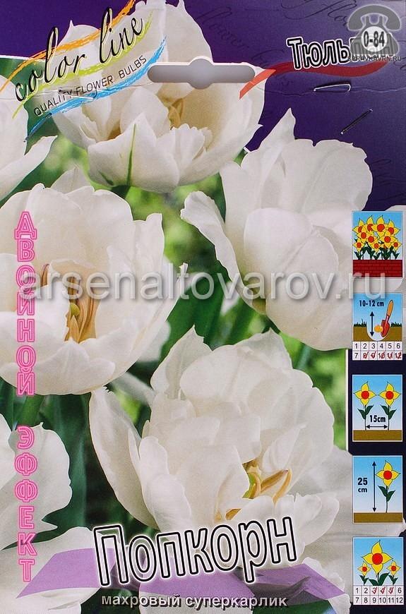 Клубнелуковичный цветок тюльпан Двойной Эффект Попкорн