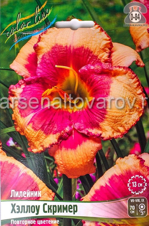 Посадочный материал цветов лилейник Хэллоу Скример многолетник корневище 1 шт. Нидерланды (Голландия)