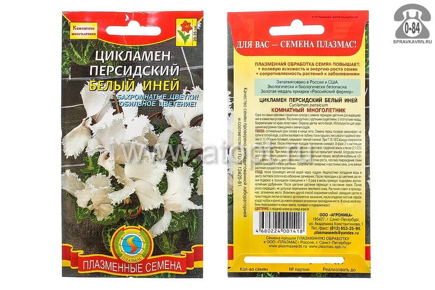 Семена цветов Плазменные семена цикламен персидский Белый иней многолетник 3 шт Россия
