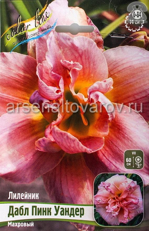 Посадочный материал цветов лилейник Дабл Пинк Уандер многолетник корневище 1 шт. Нидерланды (Голландия)