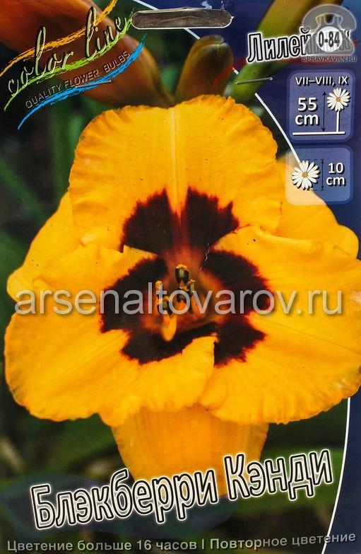 Посадочный материал цветов лилейник Блэкберри Кэнди многолетник корневище 1 шт. Нидерланды (Голландия)