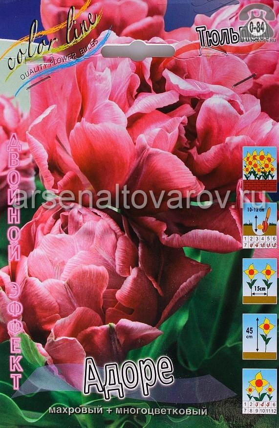 Клубнелуковичный цветок тюльпан Двойной Эффект Адоре