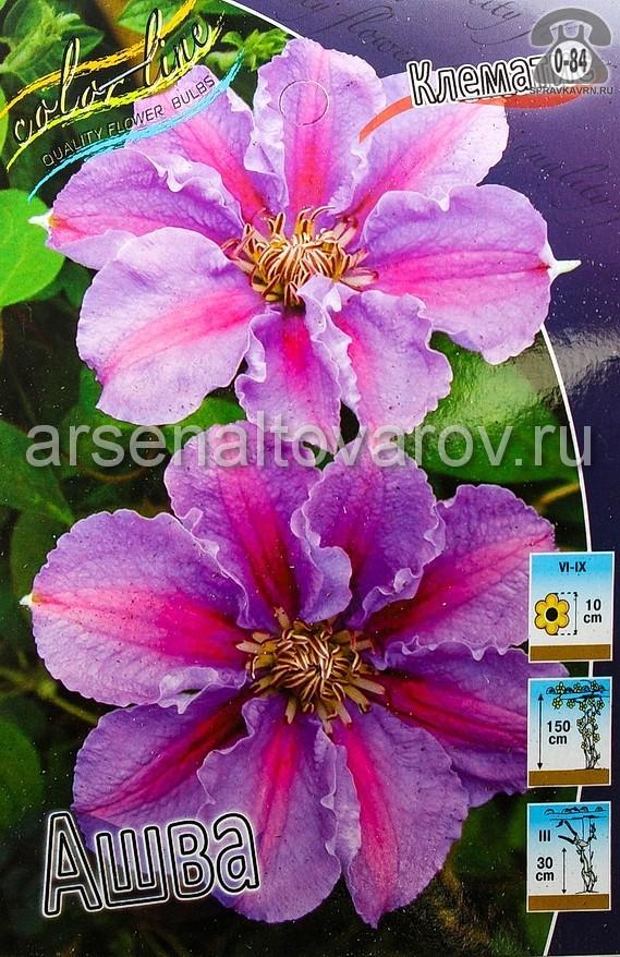 Посадочный материал цветов клематис Ашва многолетник корневище 2 шт. Нидерланды (Голландия)