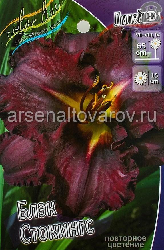 Посадочный материал цветов лилейник Блэк Стокингс многолетник гофрированная корневище 1 шт. Нидерланды (Голландия)