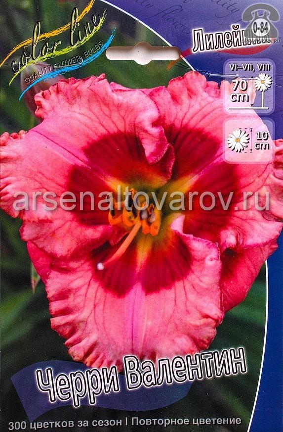 Посадочный материал цветов лилейник Черри Валентин многолетник корневище 1 шт. Нидерланды (Голландия)