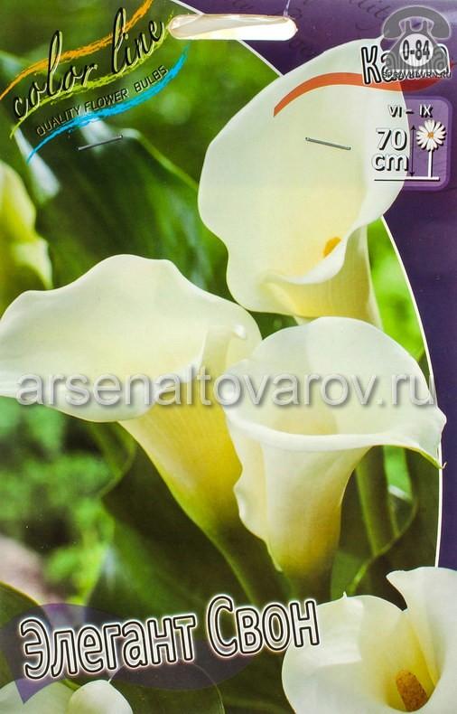Посадочный материал цветов калла (белокрыльник) Элегант Свон многолетник клубень 2 шт. Нидерланды (Голландия)